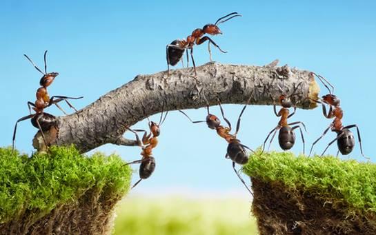 hormiguitas trabajadoras guazuvirá